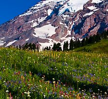 Rainier Wildflowers by RavenFalls