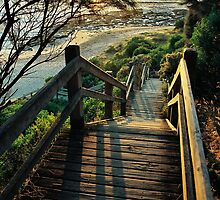 beach steps. shack bay bunurong marine park by tim buckley | bodhiimages