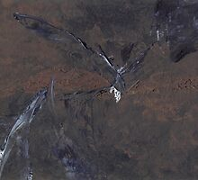 Nightbird by Leila A. Fortier