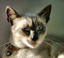 "blue eyes by Antonello Incagnone ""incant"""