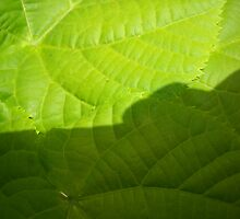 Color Green. by Vitta