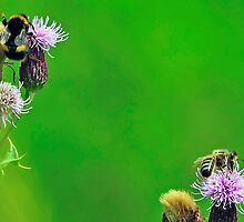 Bee On Flower 0044 by mike1242