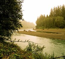 Hoh River I by Mandi  Ruch
