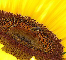 Sunflower hospitality by Vittorio Magaletti