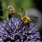 Bee on Small Globe by Kirstyshots