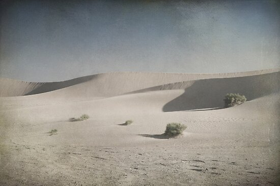 I Was Lost in the Desert by Laurie Search