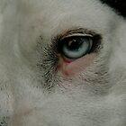 Beauty Is In The Eye Of The Beholder by Lauren Hendricks