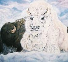 Thunder Snow White Buffalo by Shanon Padmore