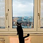 Paris Cat by John Englezos