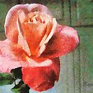 Beautiful Rose by Esperanza Gallego