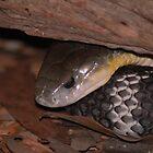Eastern Brown Snake by NickBlake