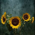 Sunflowers for Van Gogh by Lydia Marano