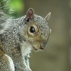 Squirrel 2 by Peter Barrett
