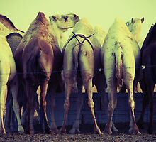 Camel Souk - Saudi Arabia by Karen Field