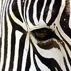 zebra eye - port lympne zoo by ClaireTiltman