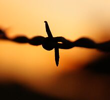 Barbed wire in silhouette by agenttomcat