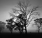 Sunrise and a tree, monochrome by Odille Esmonde-Morgan