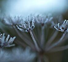 Frost by Bernie Rosser