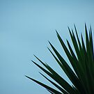 Vibrant Palm by LookOutBelow