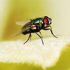 Bottle Fly by Matthew Pugh