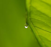 A Tear Drop in Green.... by AroonKalandy