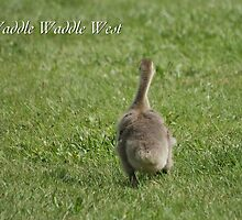 Waddle Waddle West by JpPhotos