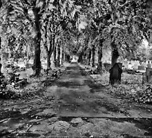 Green Path B&W by Robyn Maynard