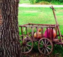 Gourd Wagon by Sandra Moore