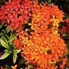 Hawaiian Flowers by kplata