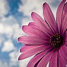 Purple Sun by Samuel Gundry