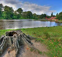 LYME PARK by MIKESCOTT