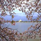 The Jefferson Memorial by Matsumoto