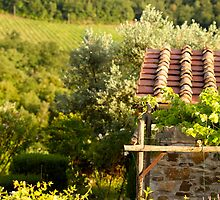Tuscan Vineyards and Terra Cotta by Nadine Rippelmeyer