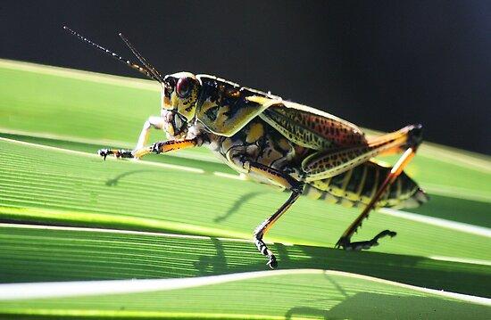 Pretty Grass Hopper by Paulette1021