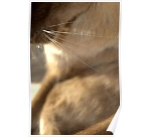 whiskers  © 2010 patricia vannucci  Poster