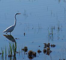 Intermediate Egret by Melva Vivian