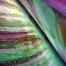 Canna lily foliage abstract by Meredith Wickham