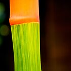 Detail of living bamboo by MadsMonsen