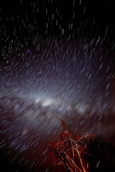 Star Trails  by Mark  Lucey