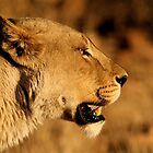 African Wildlife by Graeme Shannon