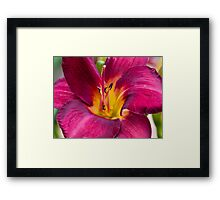 Yet another Day lily Framed Print