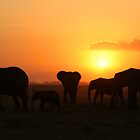 Elephant family at sunset by Graeme Shannon