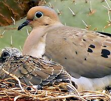 Mourning Doves: Thorn Baby and Proud Mother by paintingsheep