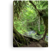Through the Moss Covered Trees Canvas Print