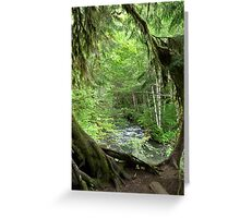 Through the Moss Covered Trees Greeting Card