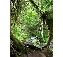 Through the Moss Covered Trees Photographic Print