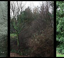 Tree triptych - Study of trees in season (2005 - 2010) by Tony Blakie