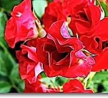 A Beautiful Rose by vigor