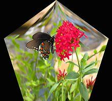 Butterfly in a Diamond Enclosure by Rosalie Scanlon
