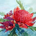 Red Waratah by Joe Cartwright